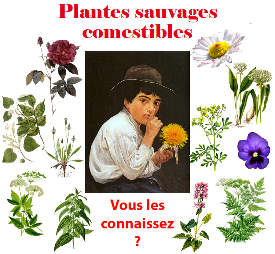 2012 04 formation plantes comestibles